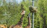 pawilon-zyrafa-blachodachowka-dachowka-balex-spektrum-6
