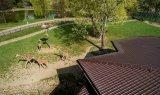 pawilon-zyrafa-blachodachowka-dachowka-balex-spektrum-4